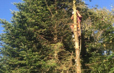 fældning af træ, topkapper klatrer